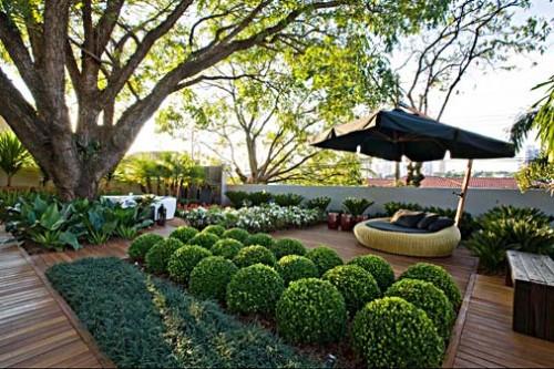 mini jardim residencial:Já pensou em plantar árvores frutíferas no seu jardim?