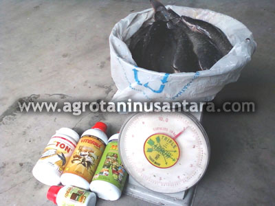 Ikan Lele yang menggunakan Produk Organik NASA | Agro Nusantara