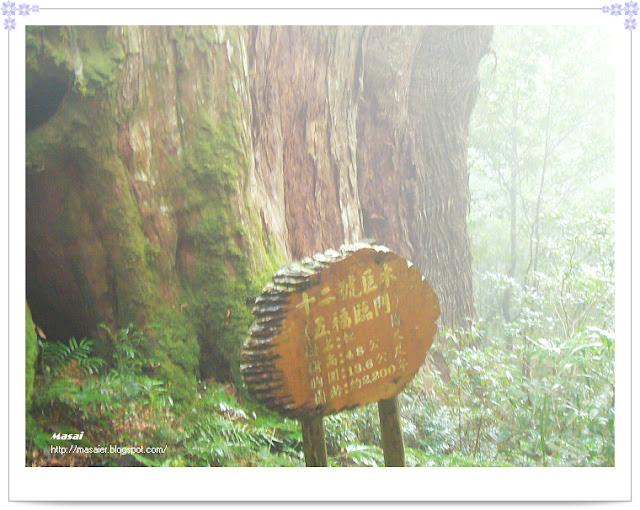 北橫拉拉山十二號巨木