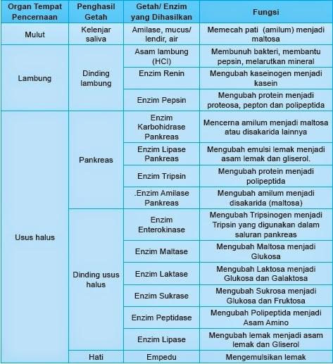 Sistem Percernaan Makanan