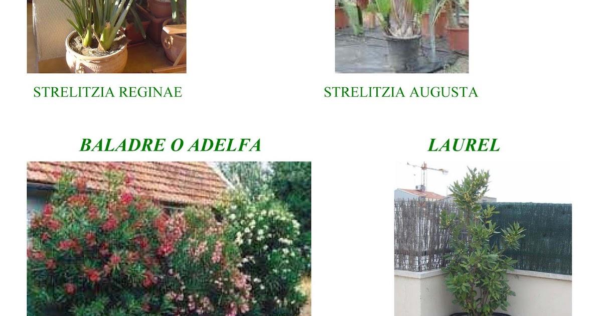 Jara jardiner a y paisajismo arbustos grandes para - Todo sobre jardineria ...