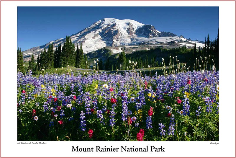 Mount Rainier above flower meadows on Mazama Ridge near Paradise, Mount Rainier National Park, Washington, USA.