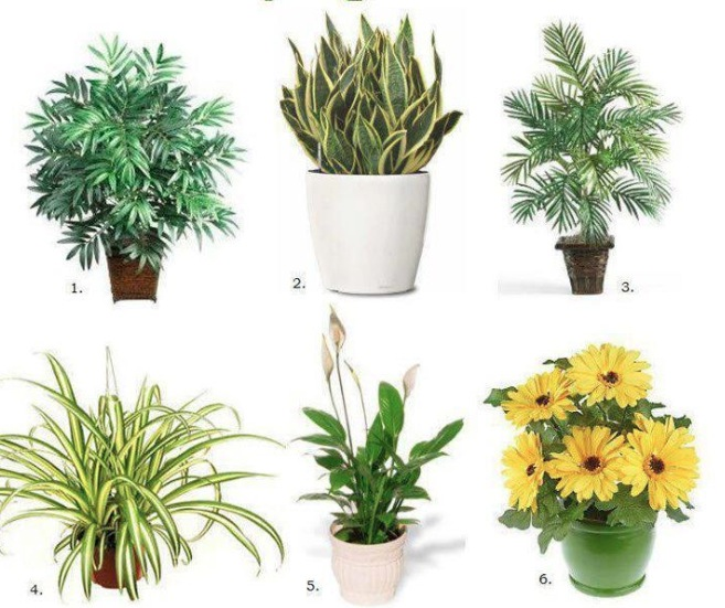 natural healing tools top 10 air purifying house plants