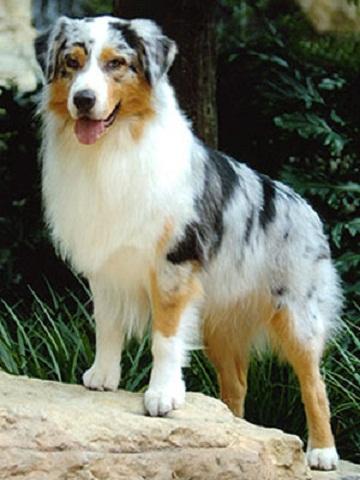 Medium-Sized Dog Breed...