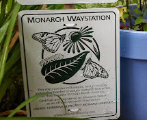 What's a Monarch Waystation?