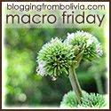 Macro Friday
