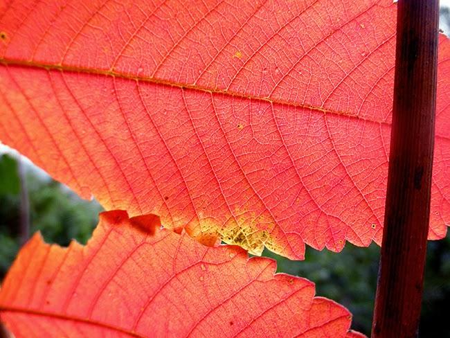colores rojos de otoño en las hojas