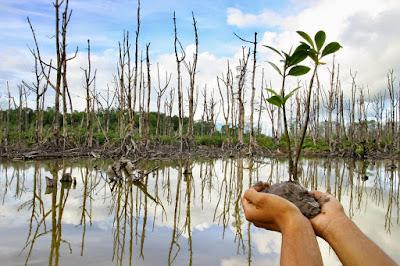 Kecamatan Gunung Anyar Tanam 10.000 Mangrove
