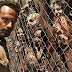 Rumores sobre el spin off de The Walking Dead