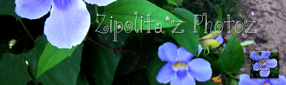 Zipolita'Z PhotoZ