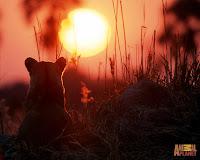 Wallpaper Sunset HD