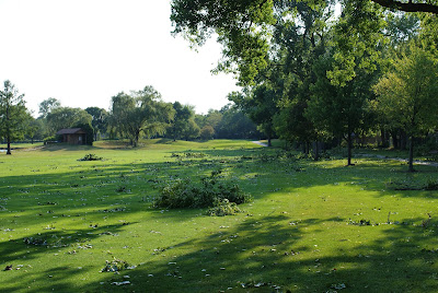 Golf Course fairway with cottonwood limbs down after wind storm