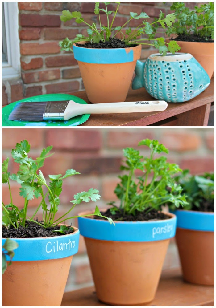 terra cotta potted herb garden