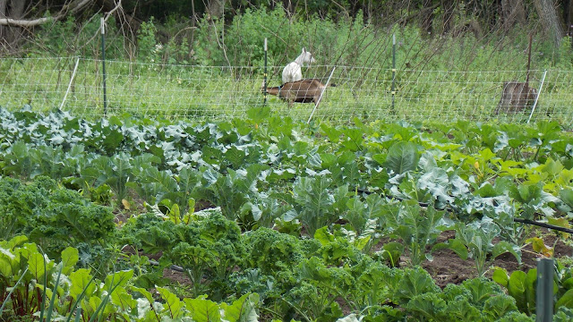 Backyard Flower Farmer : Personal Responsibility and New Paths of Simplicity