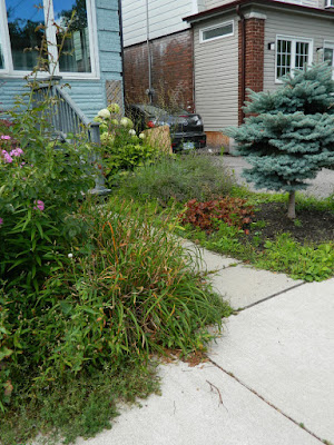 Leslieville Toronto front garden clean up before Paul Jung Gardening Services