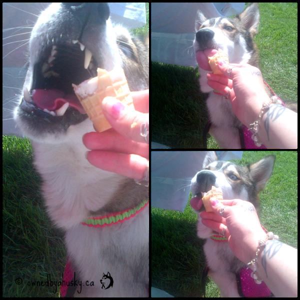 dog eats ice cream cone