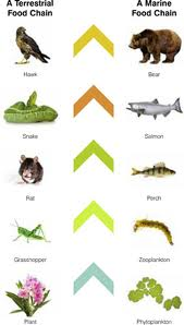 SCIENCE YEAR 5 : FOOD CHAIN IN DIFFERENT HABITATS
