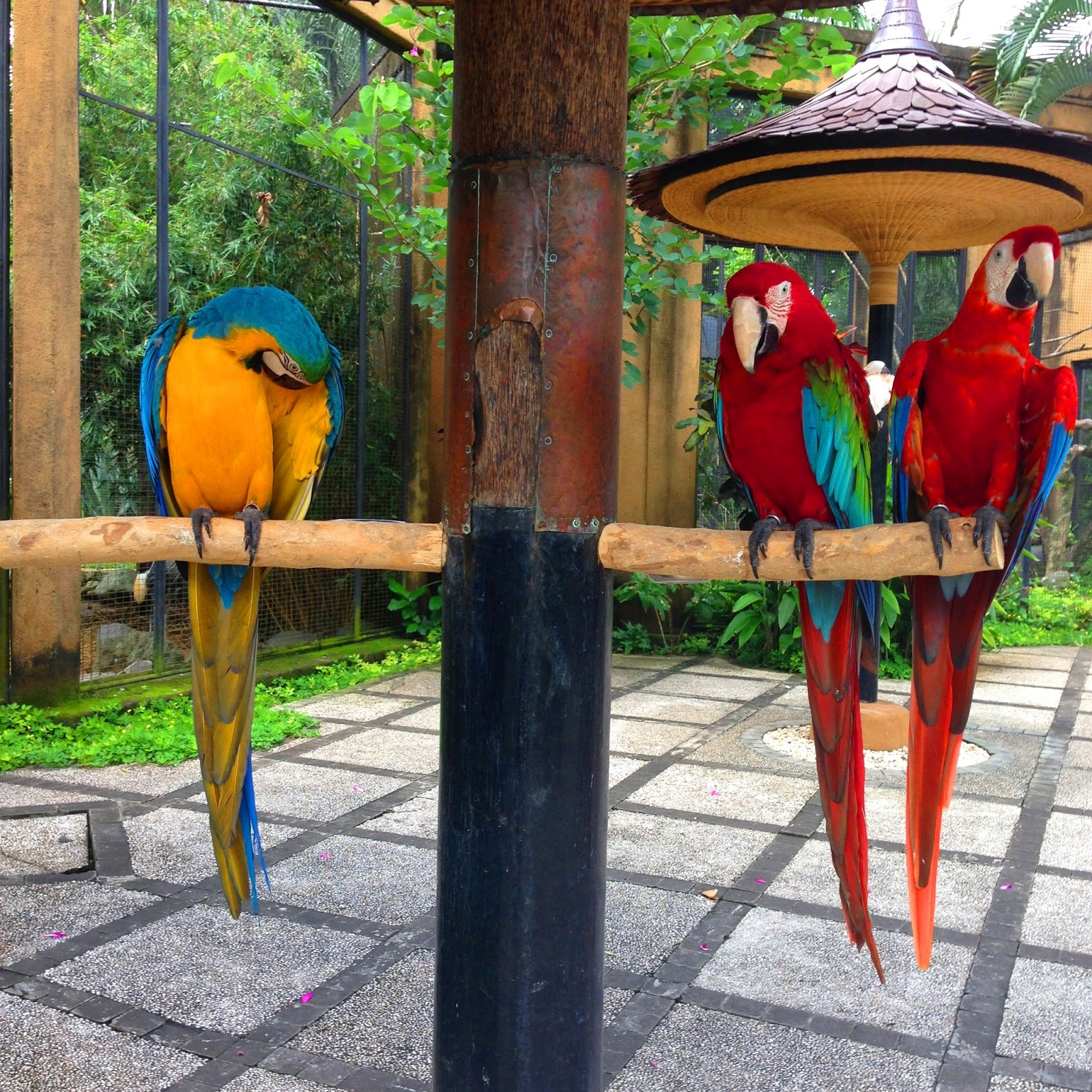 Bantall Living My Dream At Bali Bird Park Voucher Tiket Masuk Anak Wisata It Was So Lovely To See And Get Direct Interaction Those Birds I Liked Kinda Macaw Or Parrots By The Way Love Their Colour