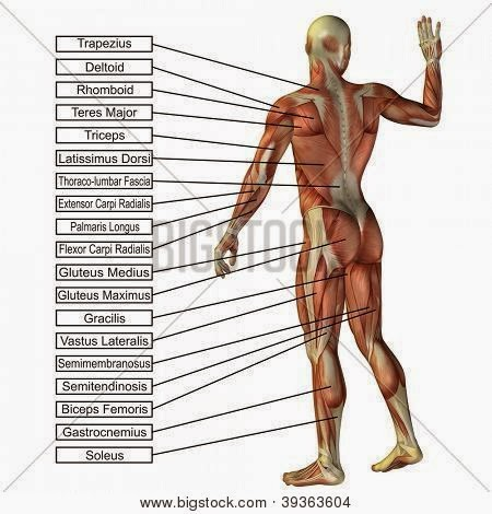 InfoMater: BIOLOGÍA HUMANA