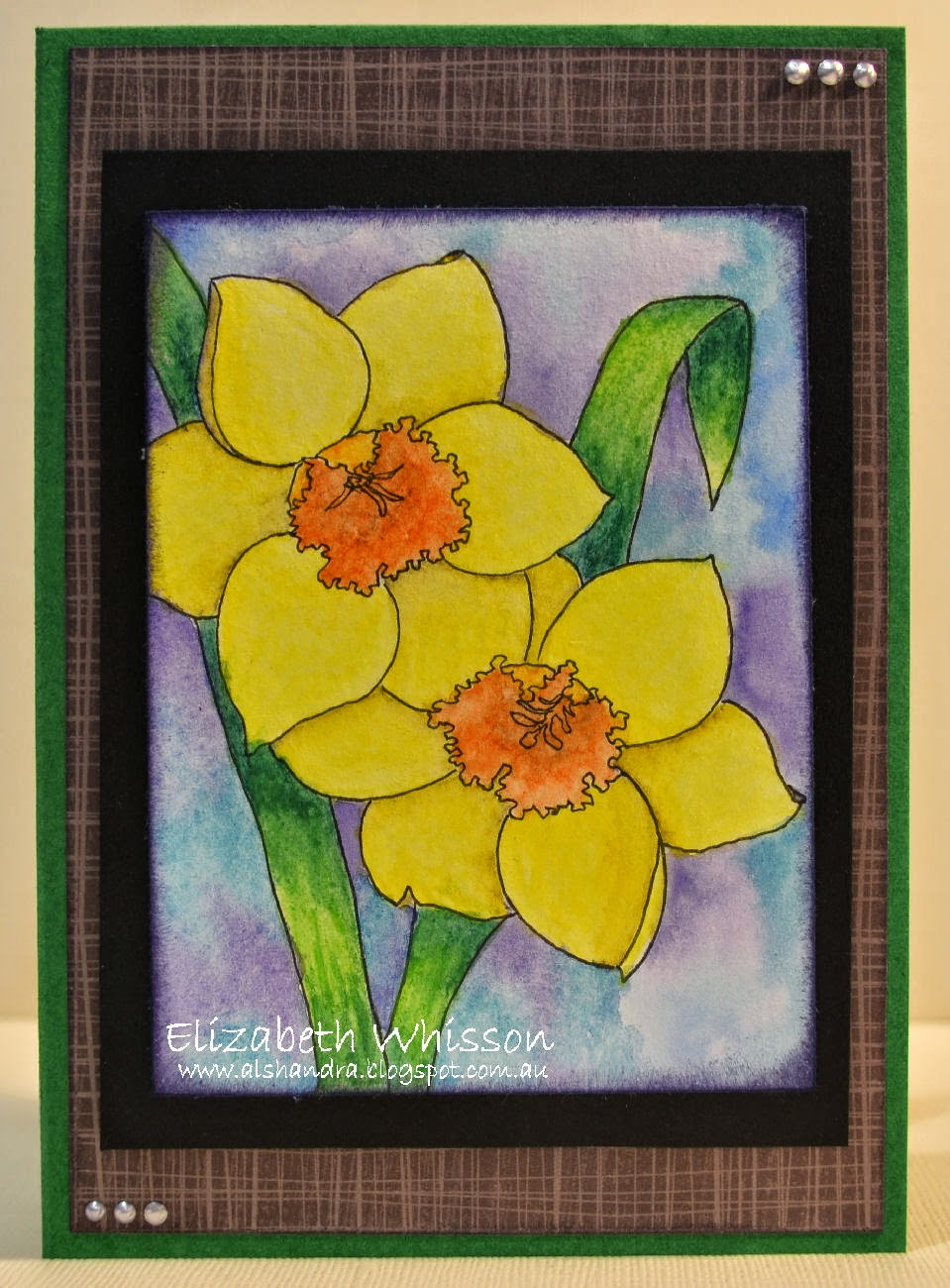 Elizabeth Whisson, handdrawn image, daffodils, watercolour pencils, watercolor pencils, Rexel Derwent