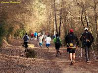 """El Bosc dels Aurons entapissat de fulles. Autor: Francesc """"Caminaire"""""""