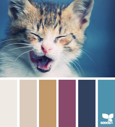 http://design-seeds.com/index.php/home/entry/kitten-hues1?utm_source=feedburner&utm_medium=email&utm_campaign=Feed:+DesignSeeds+(design+seeds)