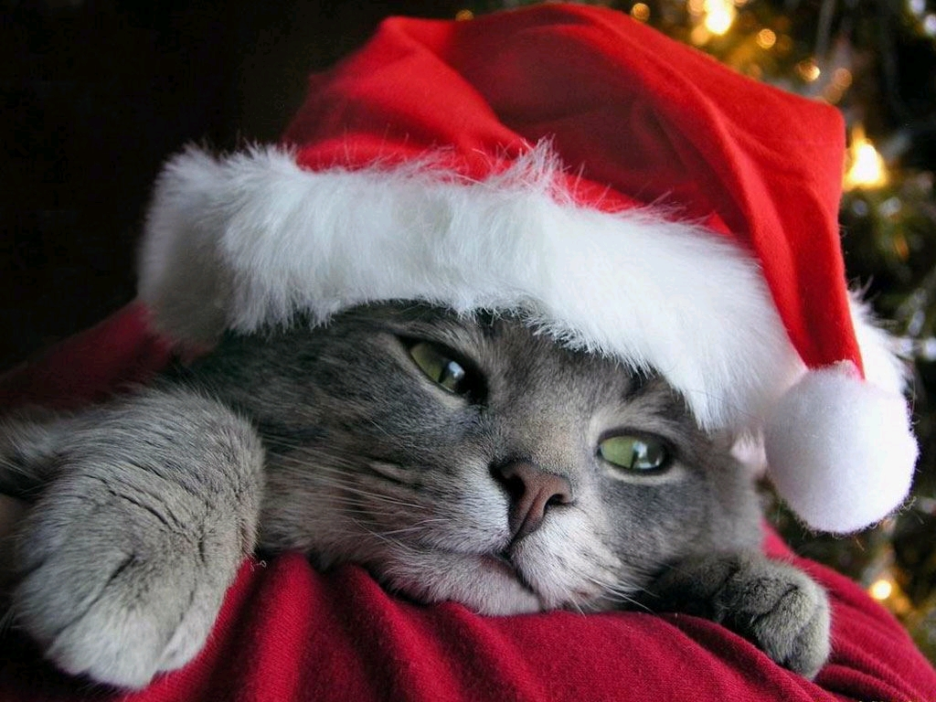 funny christmas animals awesome wallpapers