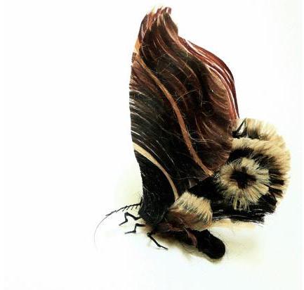 لوحات فنية لأوراق الشجر وبعض الأعمال الفنية من شعر  Hair-insects10