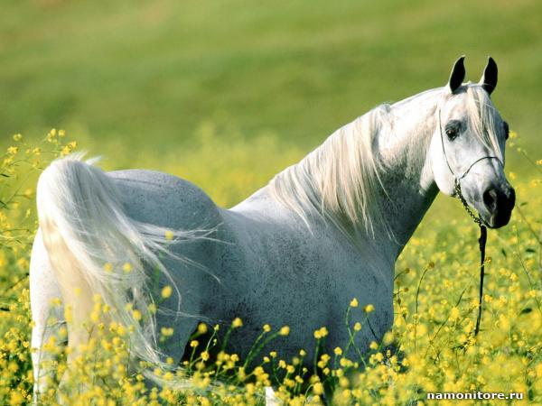 Beautiful Running White Horse Wallpapers Beautiful White Horse