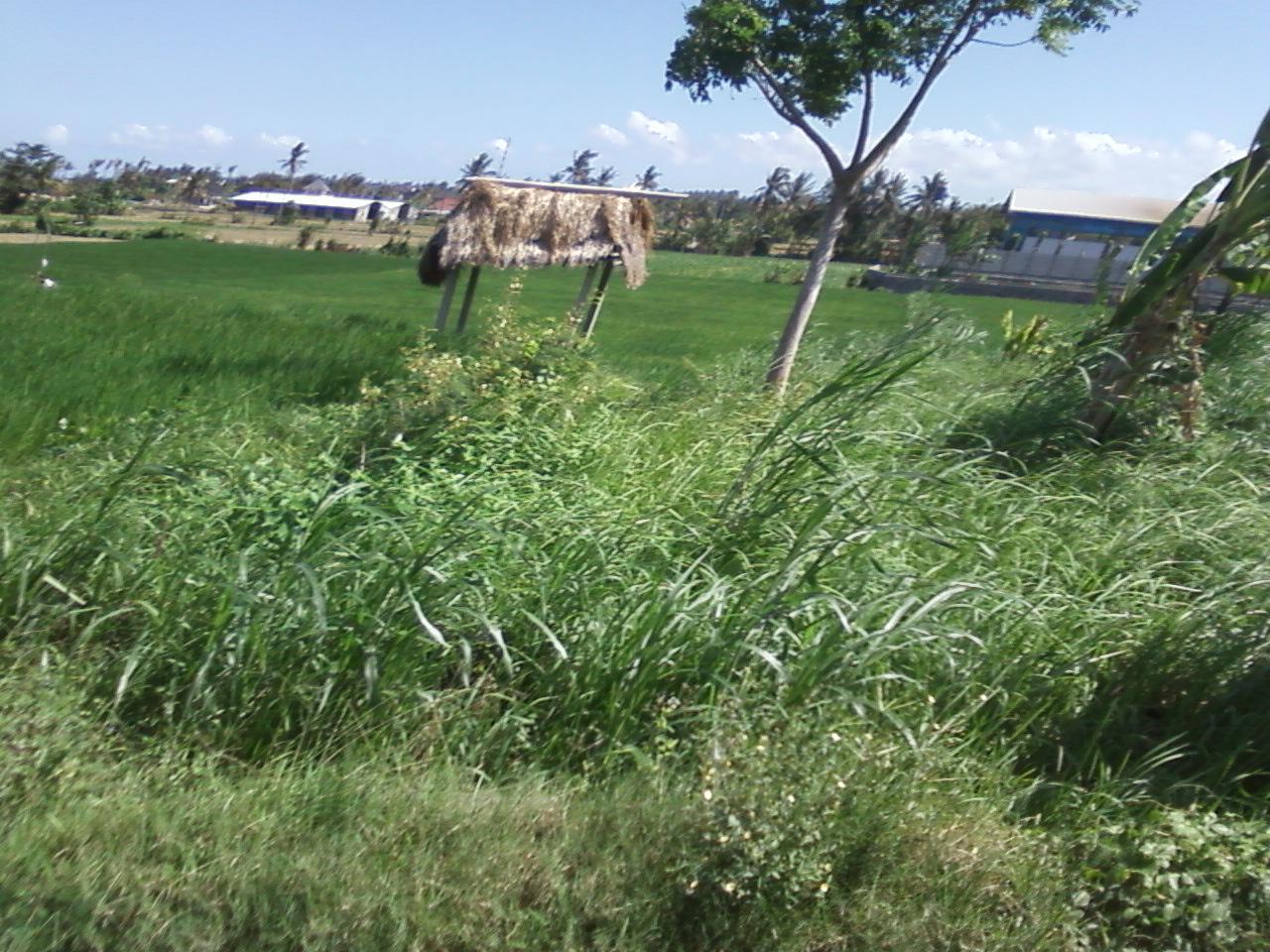 Tanah dimaksud dg batas Gubuk