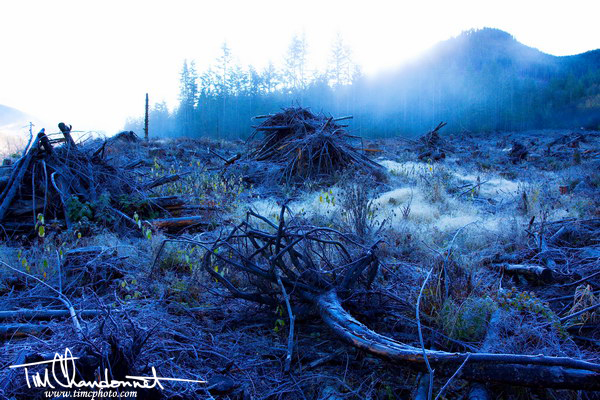Tim-Chandonnet-Photography-Foggy-timber-logging-forestry-sunrise-Pacific-Northwest-North-Cascades-Timber-Lands