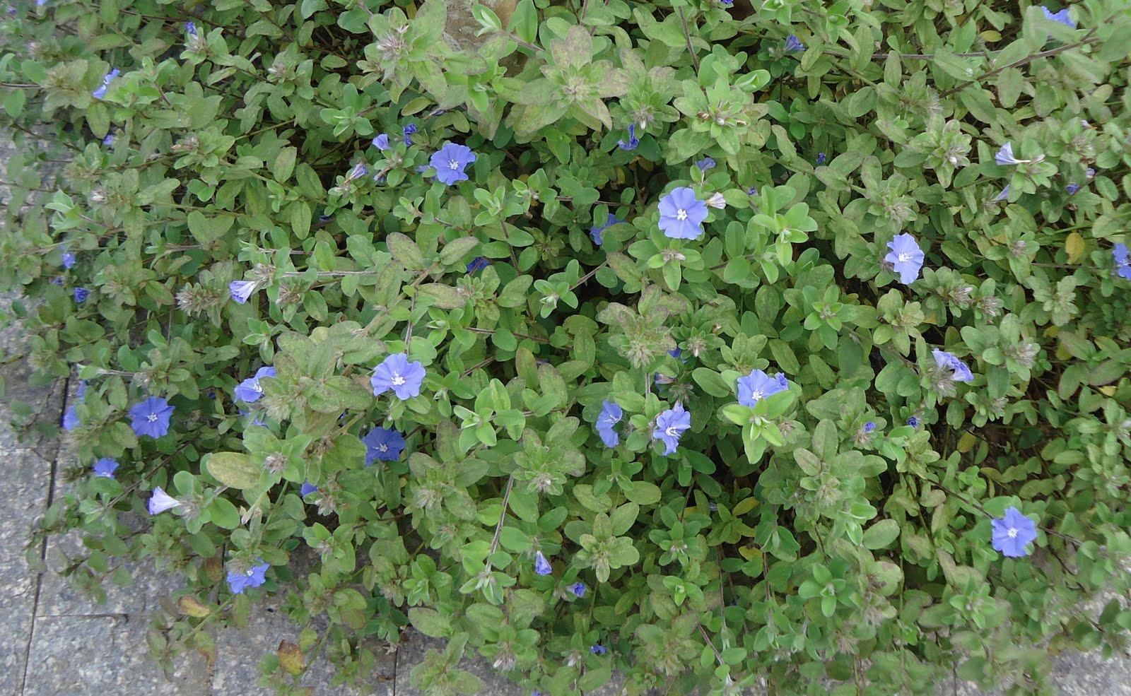 plantas de jardim que gostam de umidade : plantas de jardim que gostam de umidade:para cultivar com as crianças de crescimento rápido gosta de umidade