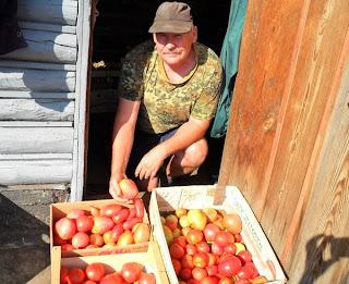 Сортировка помидоров