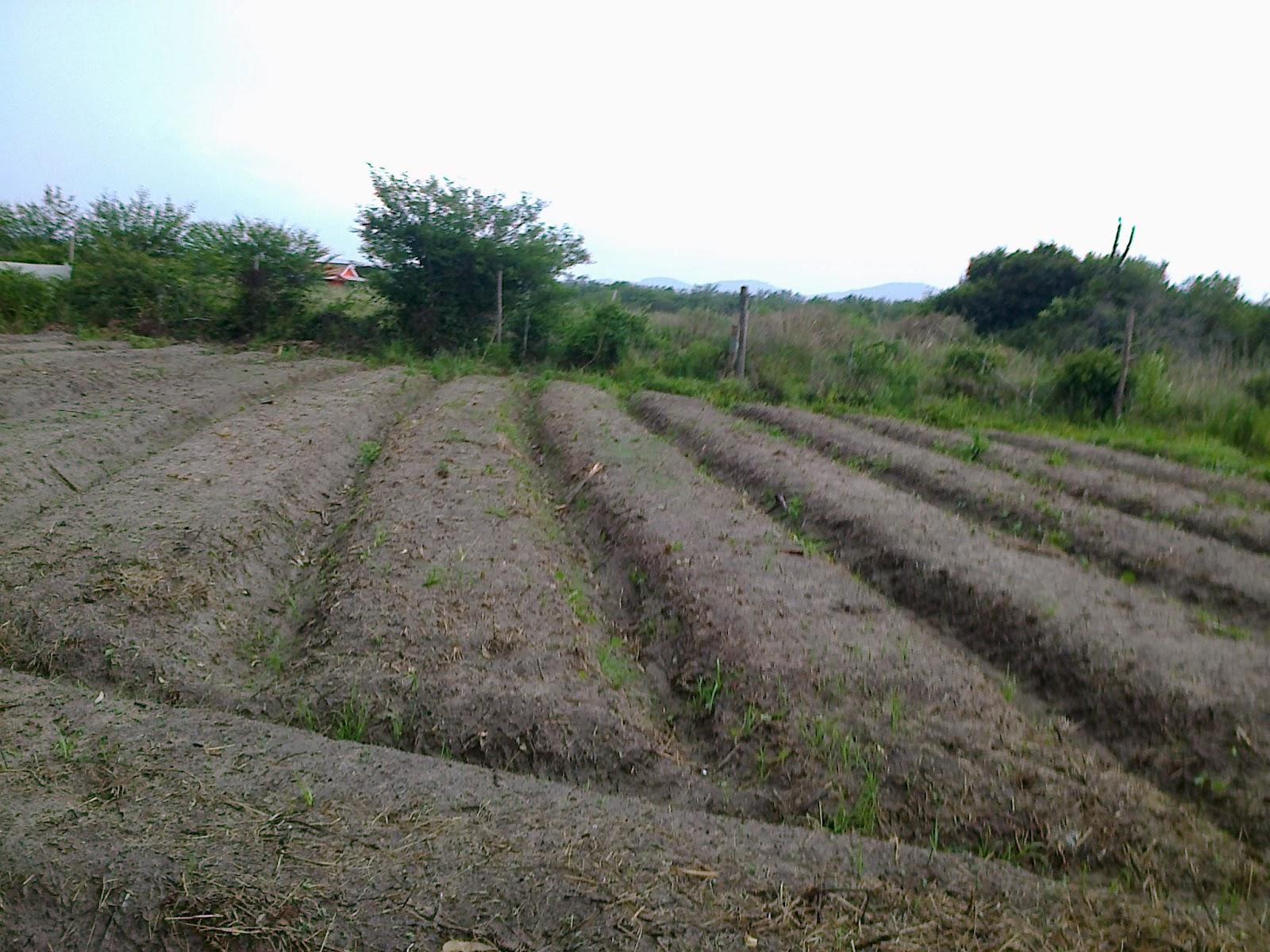 Est gio no s tio dos herdeiros solos arenosos dificultam for Tipos de terreno