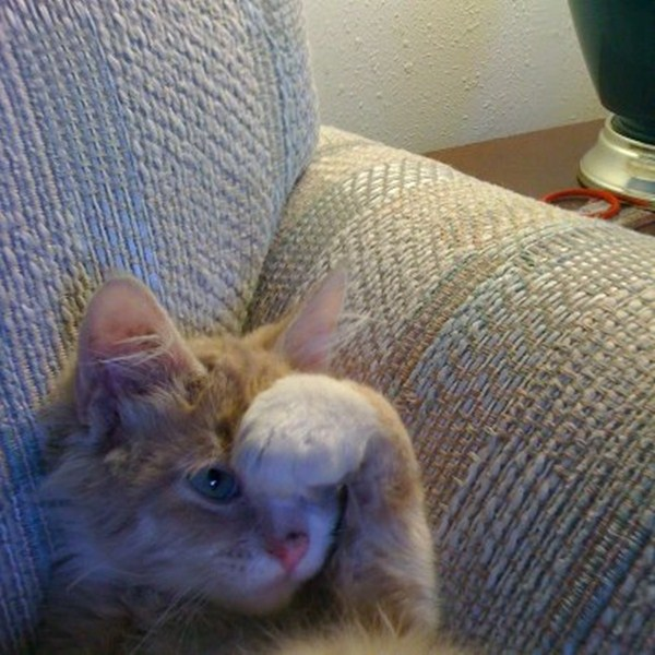 funny cats, cute cat pictures, kitten cover his head with paw