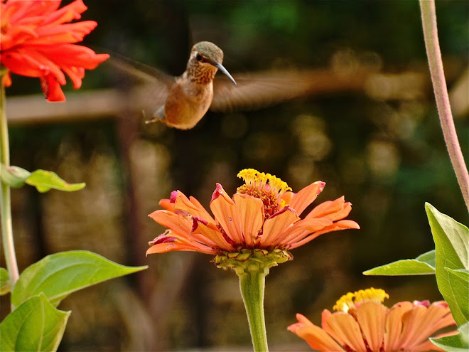 Humming bird right out the back door.