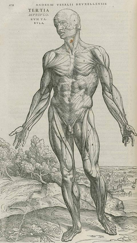 Looking at the difference from Anatomy images and Da Vinci\'s work ...