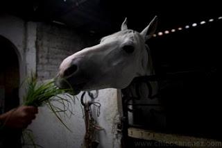 Caballos que curan es un reportaje sobre Guadalupe Peña, una escaramuza charra que se curó a sí misma de una parálisis de medio cuerpo usando el poder sanador de los caballos. Después de recobrar su salud se entregó a la misión de curar a otras personas por medio de la equinoterapia.