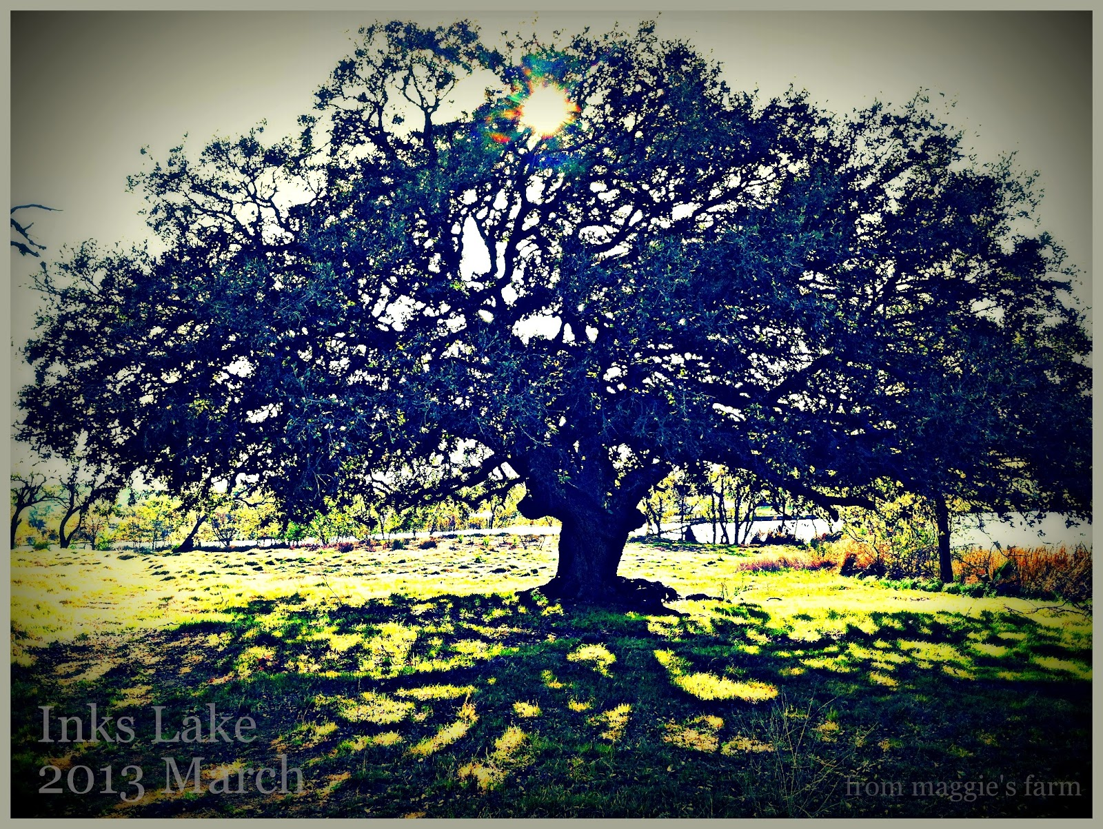 Seasonal Trees Notes >> Notes From Maggie S Farm Almost Wordless Wednesday Inks Lake