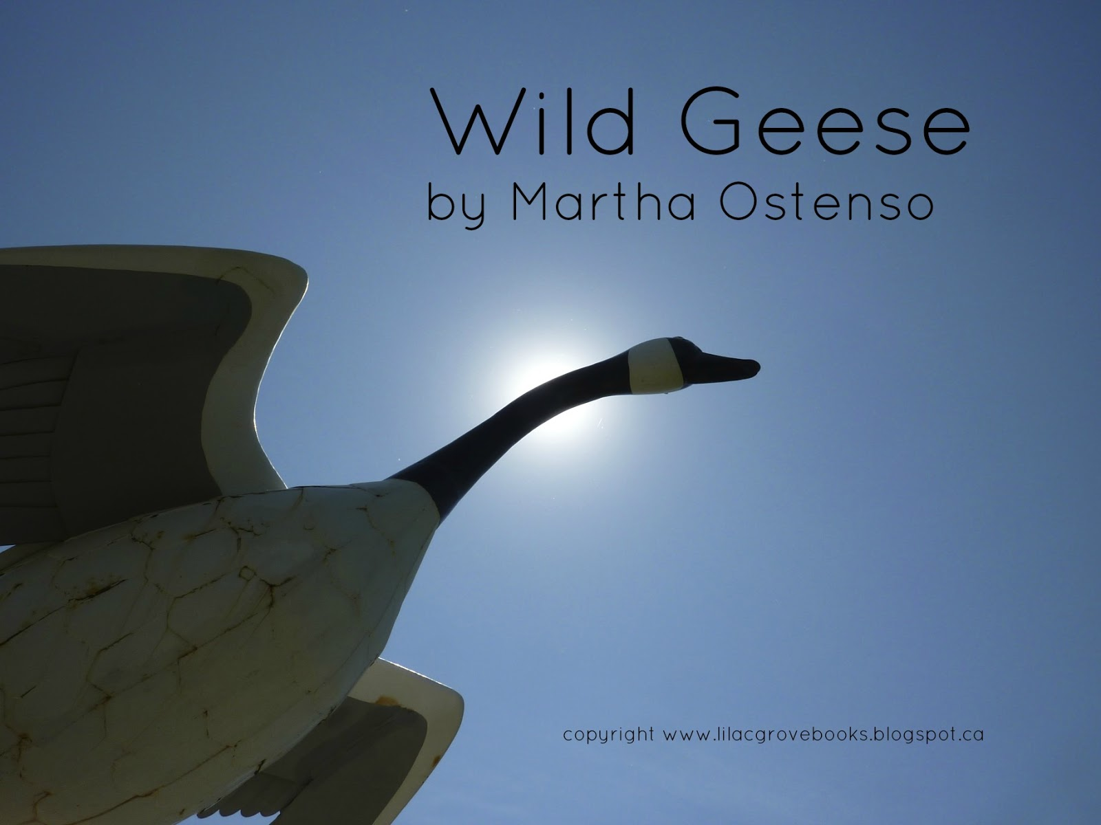 an analysis of wild geese by martha ostenso Is written from a very non-feminist point of view to begin with by martha ostenso the priest: good you most of theme analysis in wilde geese by martha ostenso all and i expect to be with.