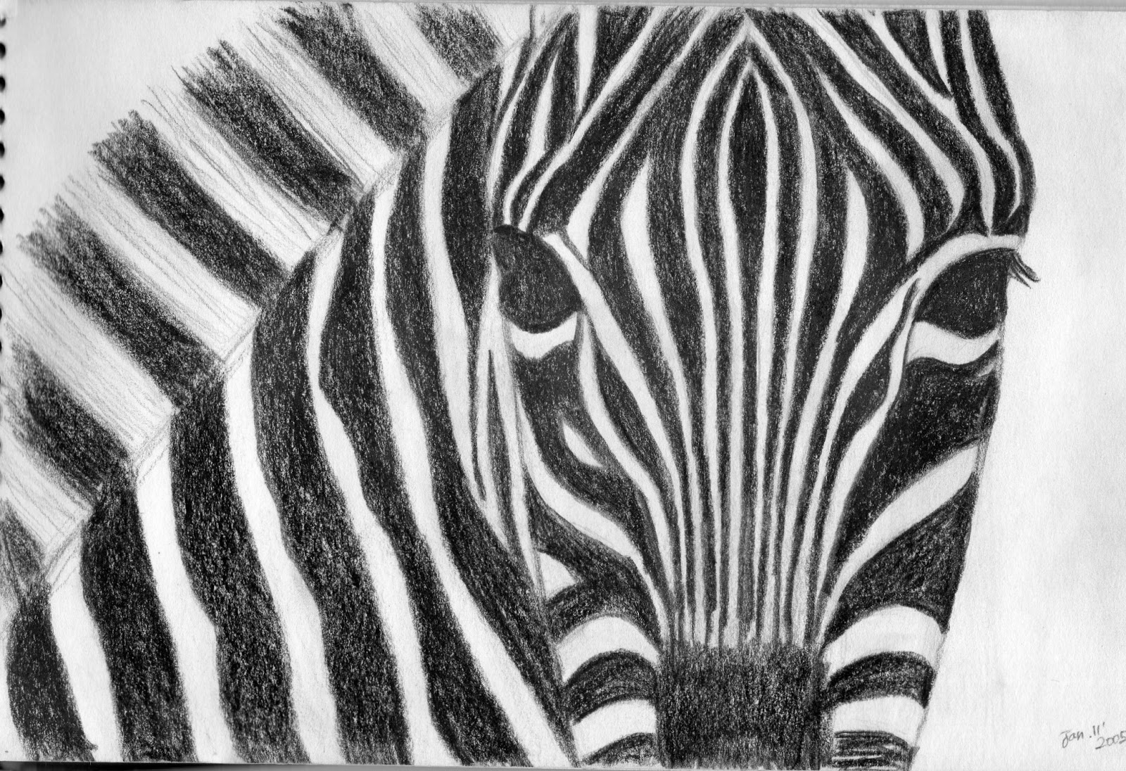 zebra pencil drawing - photo #17