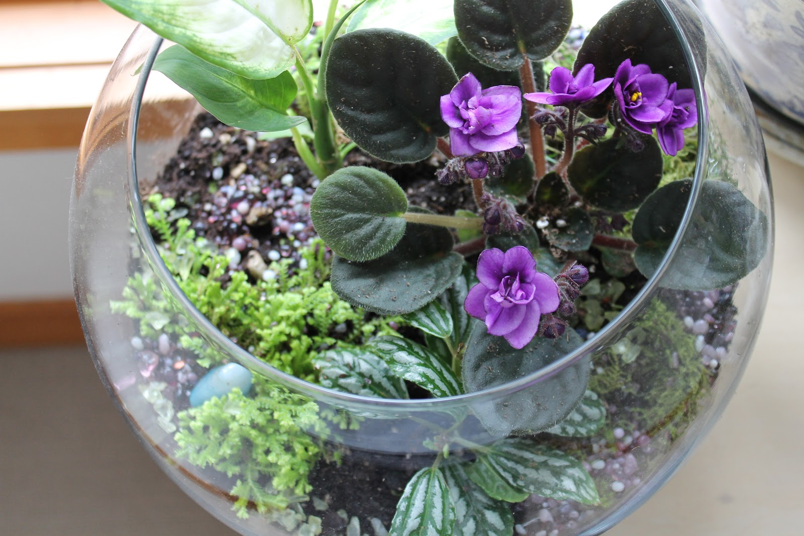 cyclamen plant care instructions