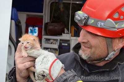 Un bombero de ecija sostiene en sus manos un gato recien nacido