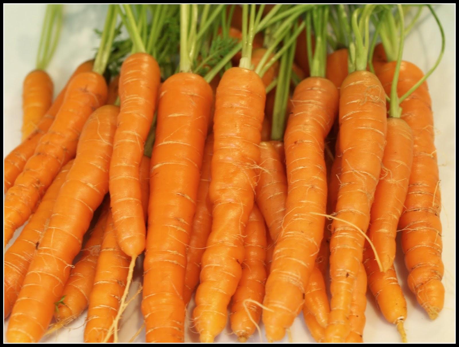 Mark's Veg Plot: Carrots - again!