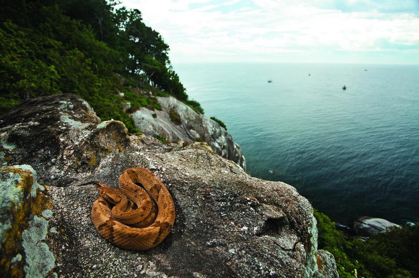 Ilha Queimada Grande - Conhecida como Ilha do Medo, por ser o habitat de cobras e aranhas venenosas