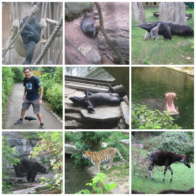 cologne koln zoo animals best must see