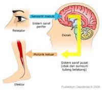 Dampak Buruk Terapi Urut Bola Mata