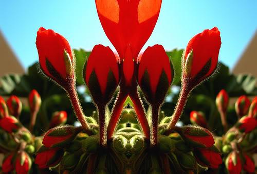 imágenes de flores bonitas