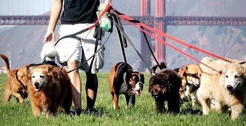 Sabe o que é um dog walker
