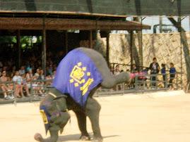 Gajah juga Belajar..!
